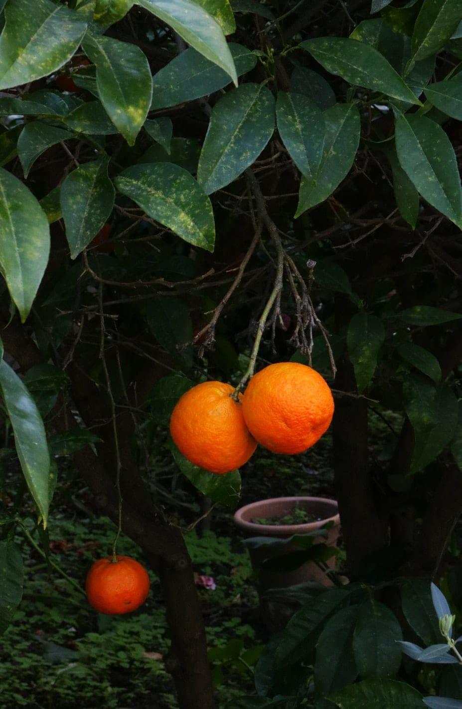 aromaterapi appelsiner